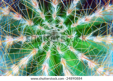 Close-up of the top of a cactus plant