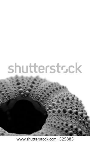 Close up of the underside of a sea urchin shell. Black and white, shot against a white background.
