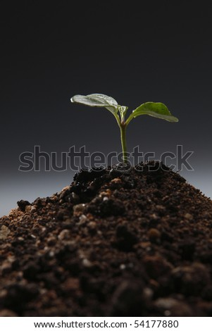 close up of the young plant - stock photo