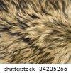 Close Up of Timber (Gray) Wolf Fur - stock photo