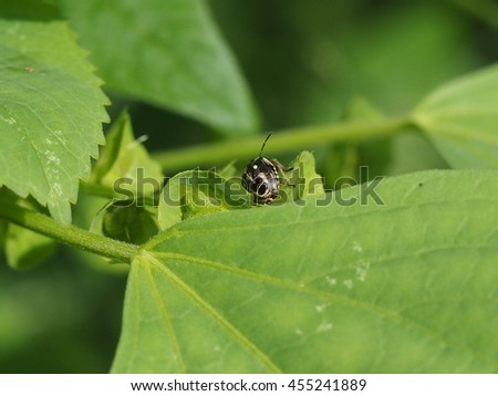 close up of tiny bug perched on  green leaf in garden