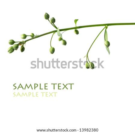 close-up of tiny flower buds against white background - stock photo