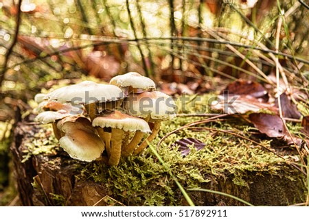 Close up of toadstools growing on a woodland floor HDR Filter.