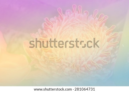 Close up of Torch ginger or Etlingera elatior blossom in flower garden - Color filter effect style pictures - stock photo