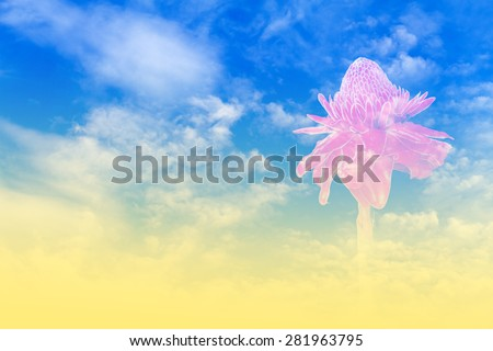 Close up of Torch ginger or Etlingera elatior blossom isolated on clouds and blue sky background - Multi-exposure with color filter effect style pictures - stock photo