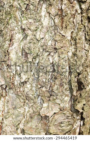 Close up of tree bark - stock photo