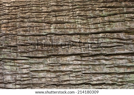 Close up of Tree bark texture for background. - stock photo