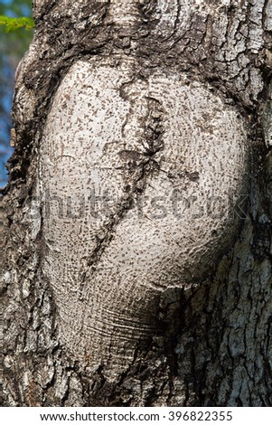 Close-up of tree bark texture for background