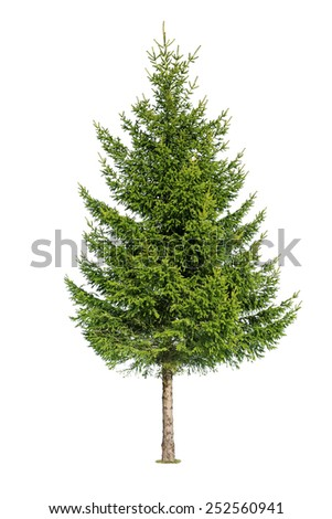 Close up of tree isolated on white background - stock photo