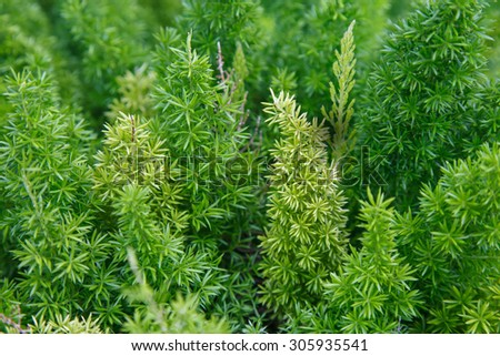 Close-up of trees, Background - stock photo