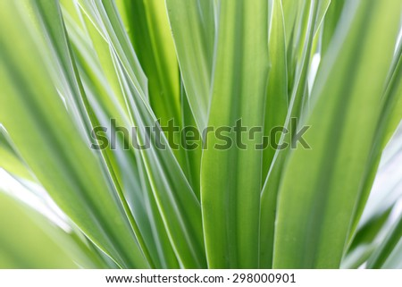 Close up of Tropical Green Leaf Texture use as a Background for Design - stock photo