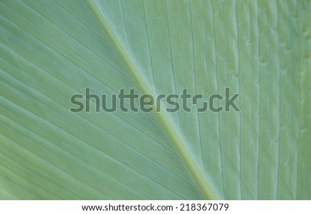 Close up of Tropical Green Leave Texture - stock photo