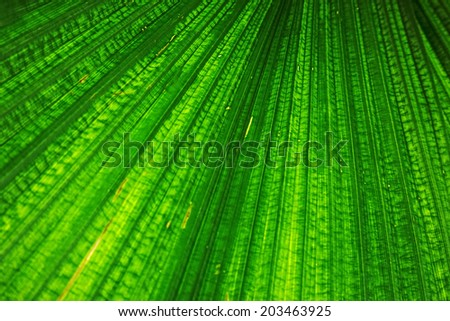 Close up of Tropical Green Leave Texture use as a Background - stock photo