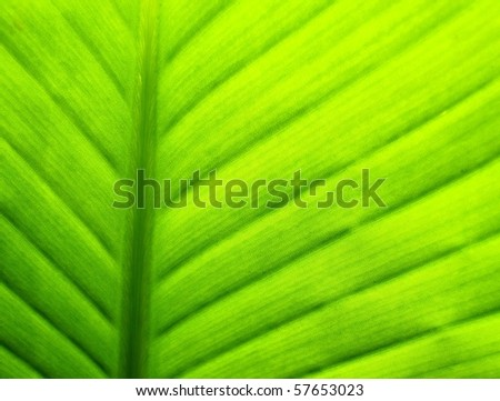 close up of tropical heliconia flower leaf in hawaii - stock photo