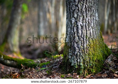 Close up of trunk of conifer tree  in wilderness area on sunny day in early spring in Scandinavia - stock photo