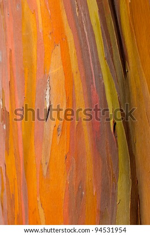 Close up of trunk of eucalyptus tree showing colorful patterns - stock photo