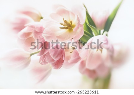 Close up of tulips in a vase with blur and soft focus effects