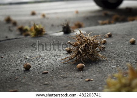 Close-up of turkish hazelnuts (also called turkish filbert) on wet asphalt street at Budapest, Hungary