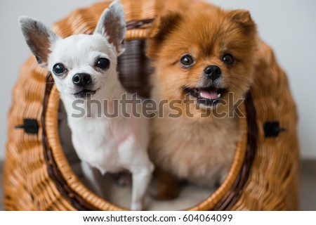 Puppy Stock Images Royalty Free Images Amp Vectors