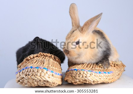 close-up of two rabbits, black and beige, sitting in bast shoes on a light background studio - stock photo
