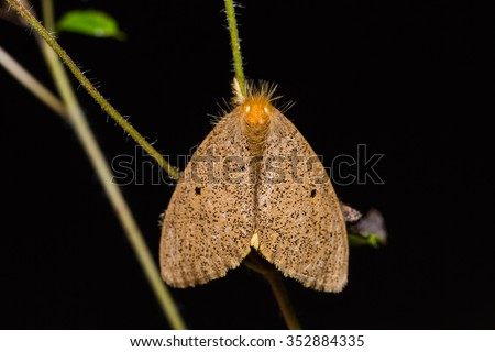 Close up of unidentified brown moth in nature, flash fired - stock photo