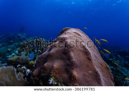 Close up of variety of marine life on reef in Caribbean including yellow and black fish, sponges, sea fans and coral - stock photo