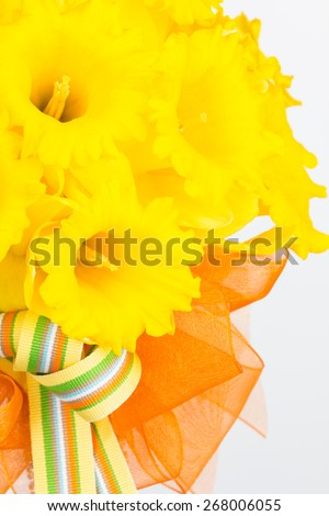 Close up of vivid yellow trumpet daffodil hand tied bouquet with striped and orgaza ribbon bow and copy space. - stock photo