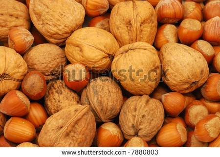 Close-up of walnuts and hazelnuts