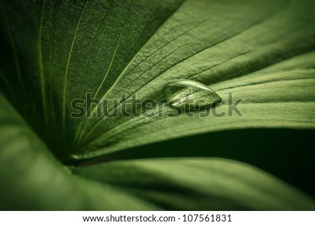 Close-up of water drop on beautiful green leaf - stock photo
