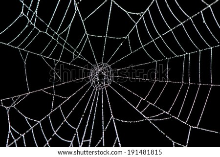 Close up of water droplets on a spider web.