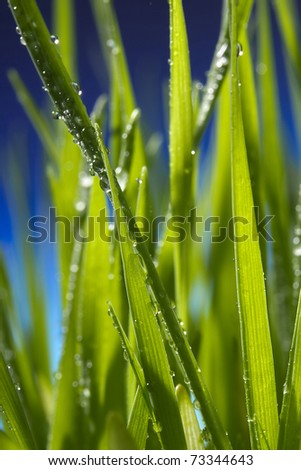 Close-up of water drops on green grass blades. - stock photo