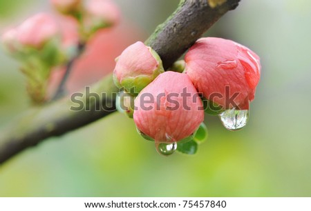 Close up of water drops under pink flower bud - stock photo