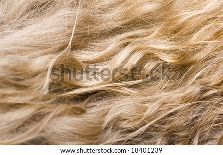 close-up of wavy blond hair - stock photo