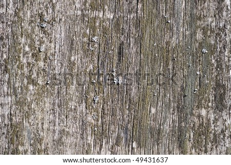 Close up of weathered wooden background with lichen