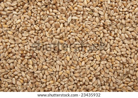 close up of wheat forming natural background