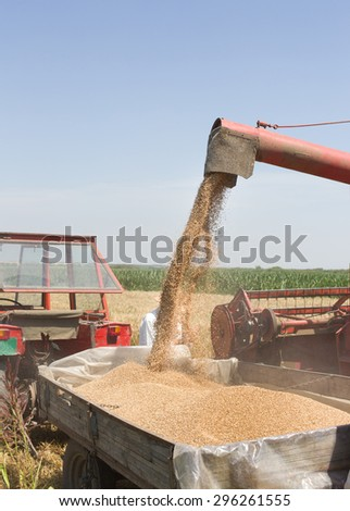 Close up of wheat harvesting, combine harvester throwing grains into tractor trailer - stock photo