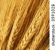 Close up of wheat nice detail background - stock photo