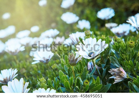 Close up of white and purple flower in the garden against sun light ray - stock photo