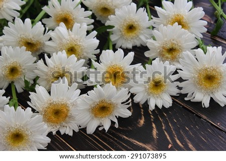 close-up of white chamomile flowers lying - stock photo