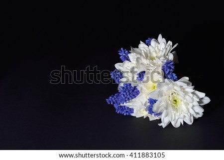 Close up of white chrysanthemum and blue grape hyacinth with dramatic lighting on dark background. Studio lights and shadows - stock photo