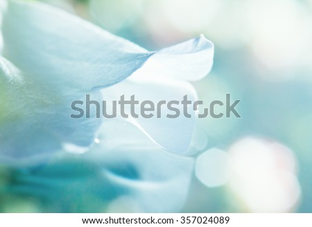 close up of white flower petal, shades of white, teal, soft dreamy image - stock photo