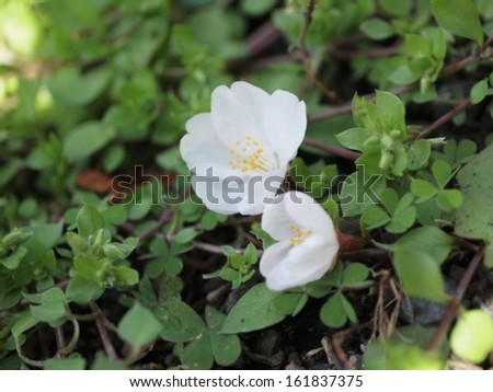 Close-up of white flowers in bloom - stock photo