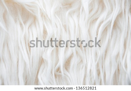 Close-up of white fur background