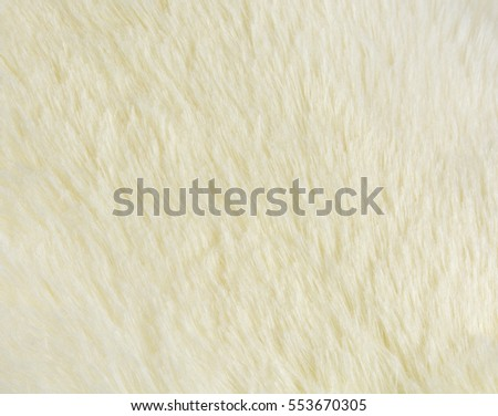 Close up of white fur texture