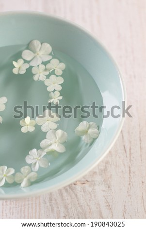 Close up of white hydrangea flowers  floating in bowl of water  - stock photo