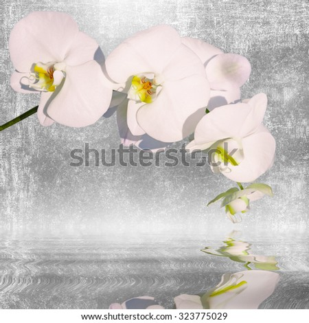 Close-up of white orchid phalaenopsis. Bouquet of flowers orchids reflected in water - stock photo