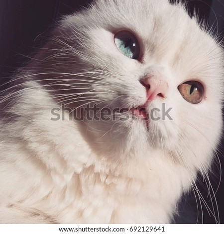 Close-up of white persian cat