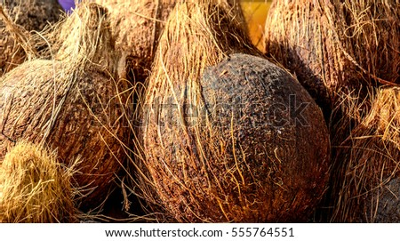 Close up of  whole fresh brown coconuts on retail market. Israel.