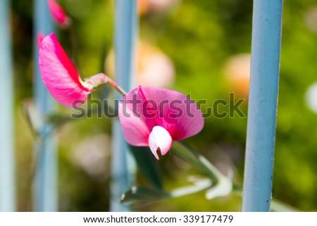 Close-up of wild flowers in Valparaiso - stock photo