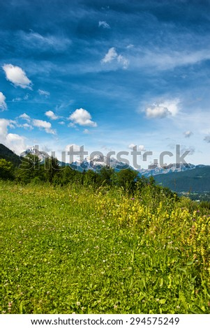 Close up of wild grassy meadow with trees and snow-capped mountains in backdrop beneath blue sky and white clouds - stock photo